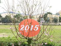 <a href=http://tambinh.vn/chuc-mung-nam-moi-xuan-at-mui---2015_v348.html>Chúc mừng năm mới Xuân Ất Mùi - 2015</a>