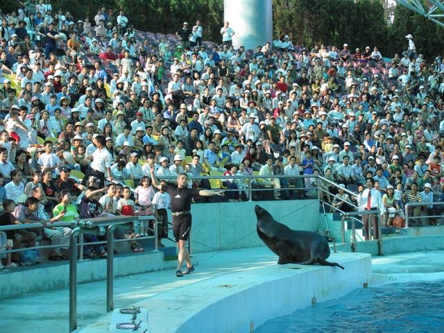 Thưởng thức tiết mục trình diễn của Sư tử biển tại Tuần Châu