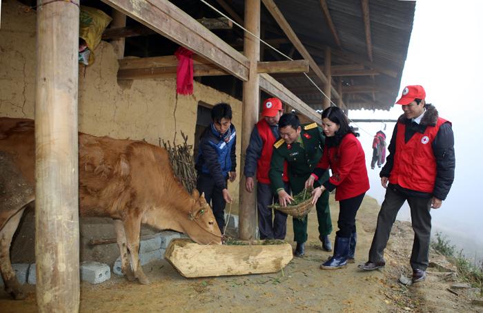 Tặng 2 con bò giống, mỗi con trị giá 15 triệu đồng cho 2 hộ gia đình khó khăn nhất