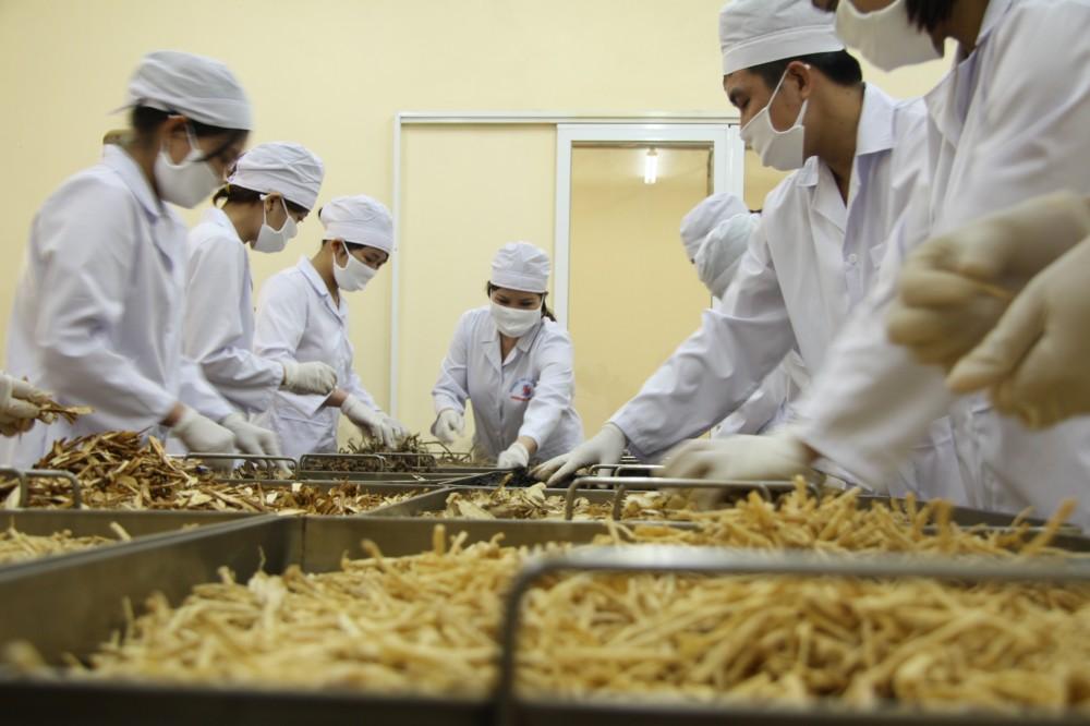 TGĐ Lê Thị Bình hướng dẫn công nhân sản xuất sao tẩm dược liệu