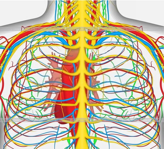 Viêm dây thần kinh liên sườn nên ăn gì kiêng gì