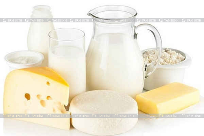 Sữa và các chế phẩm từ sữa rất giàu canxi