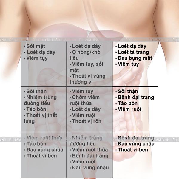 Cơ quan nội tạng vùng bụng trái