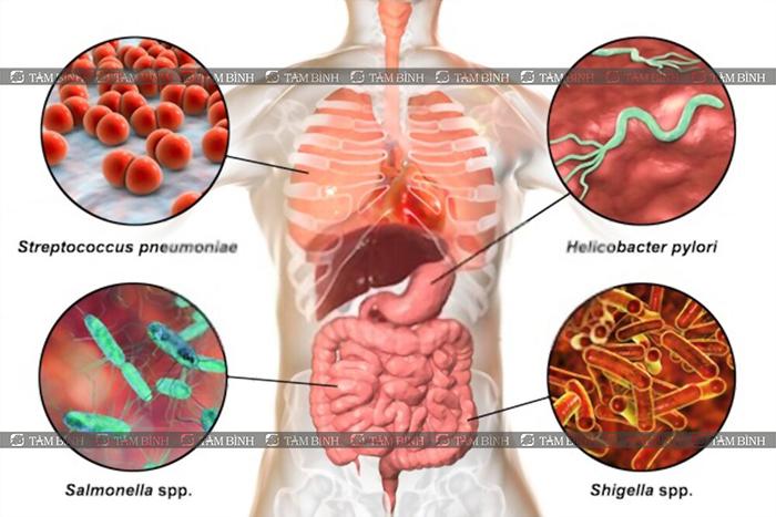 công dụng của nano curcumin