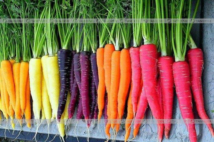 Cà rốt chữa đại tràng kích thích