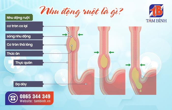 nhu động ruột là gì