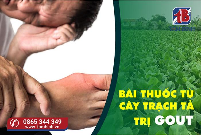 bài thuốc trị gout từ cây trạch tả