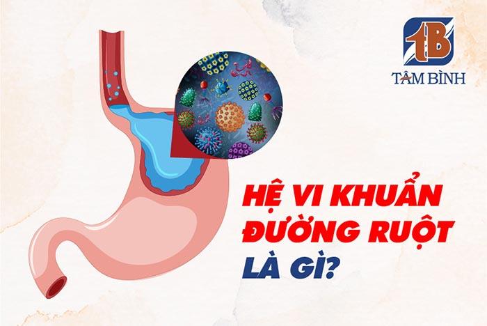 hệ vi khuẩn đường ruột là gì