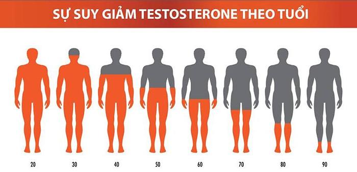 Biểu đồ suy giảm testosterone ở nam giới
