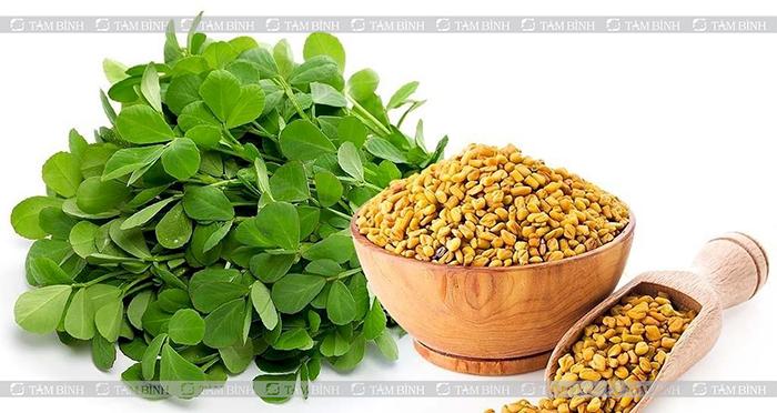 cỏ cà ri giúp tăng testosterone nội sinh