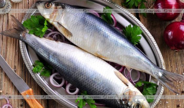 Mỡ máu nên ăn cá trích
