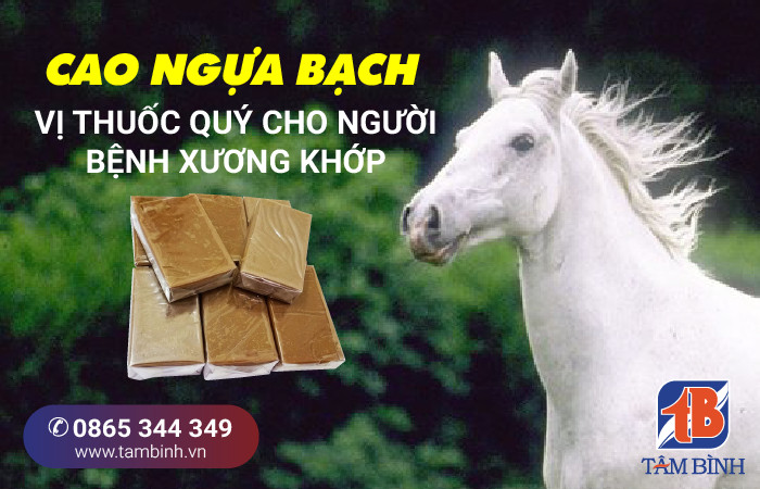 cao ngựa bạch