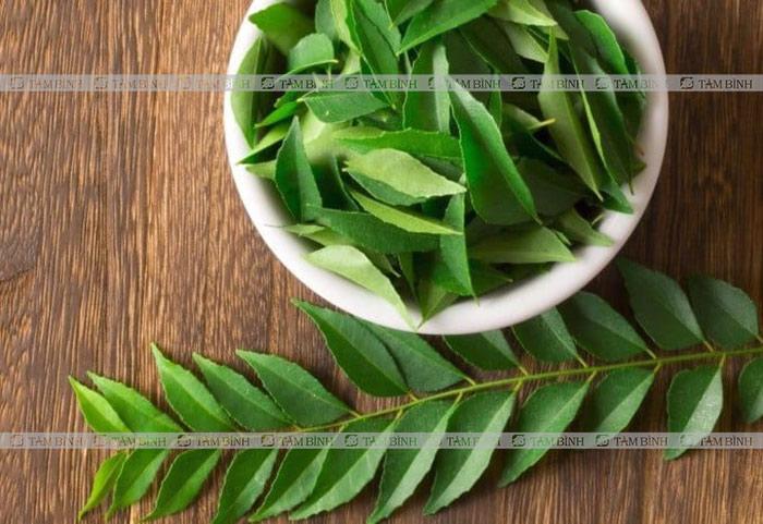 Lá neem Ấn Độ và an xoa chữa bệnh tiểu đường